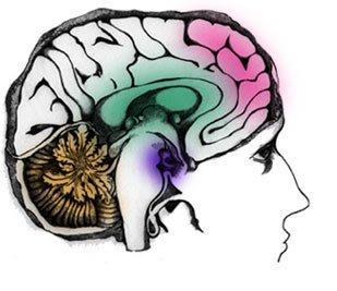Otak Kita